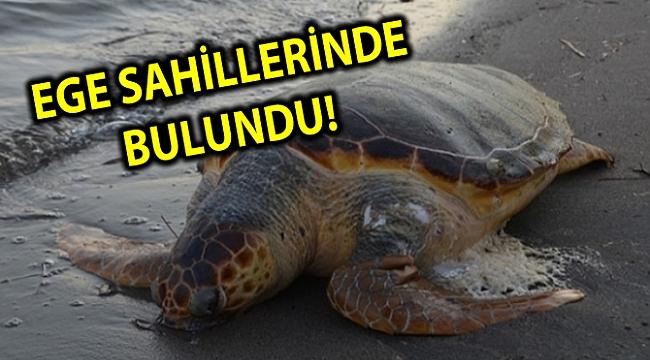 EGE SAHİLLERİNDE BULUNDU!