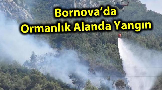 Bornova'da Ormanlık Alanda Yangın