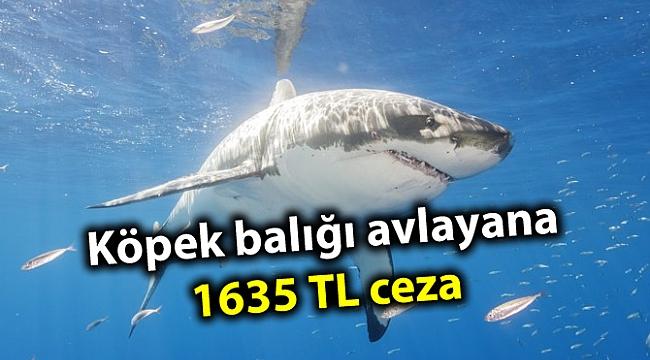 Köpek balığı avlayana 1635 TL ceza