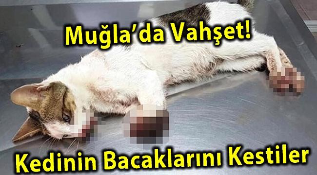 Muğla'da Vahşet! Kedinin Bacaklarını Kestiler