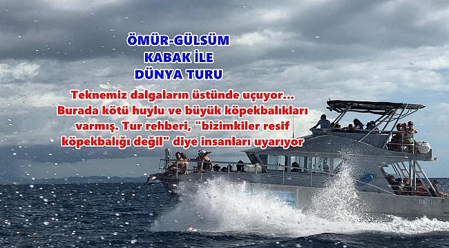 FİJİ ADASI'NDA JAWS VAR AMA FİLM DEĞİL!